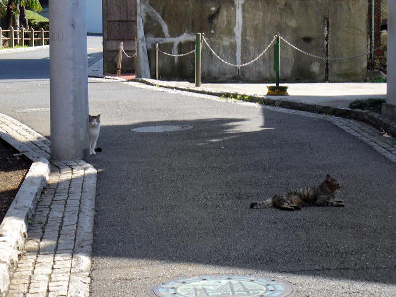 住宅街路上の猫たち2
