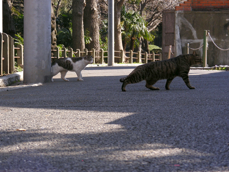 住宅街路上の猫たち3