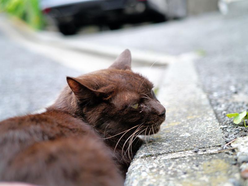 腰をトントンの焦げ茶色猫2