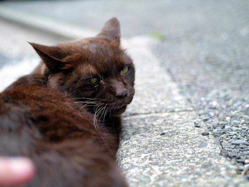 腰をトントンの焦げ茶色猫3