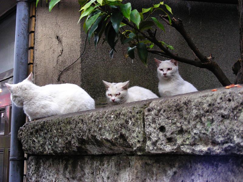ブロック塀の猫たち1