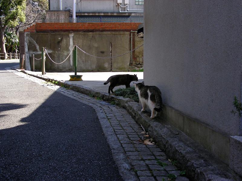住宅に沿って歩く猫たち1