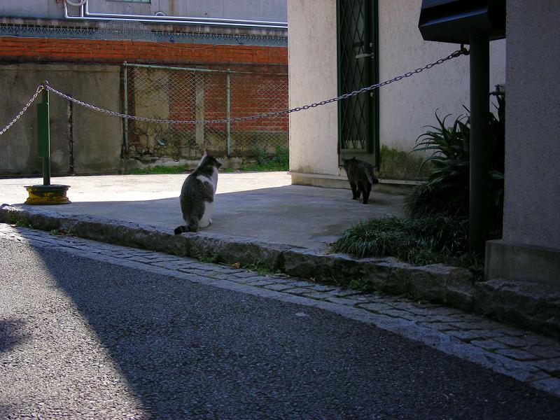 住宅に沿って歩く猫たち2