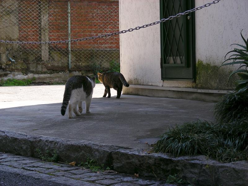住宅に沿って歩く猫たち3