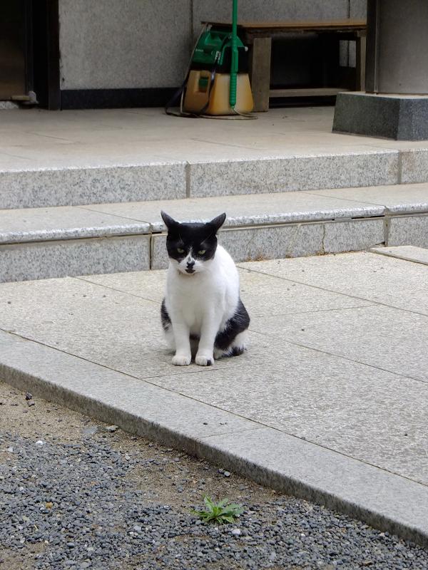 不満顔の白黒猫1