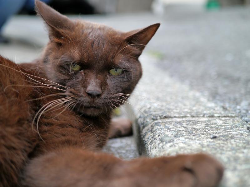 怒ってる風の焦げ茶色猫1
