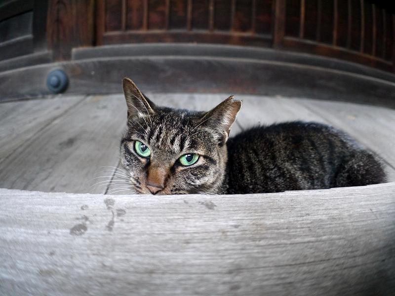 欄干から見ているキジトラ猫2