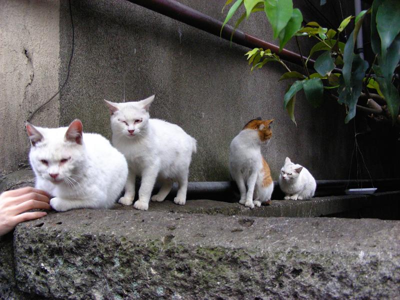 塀の上の猫一族1