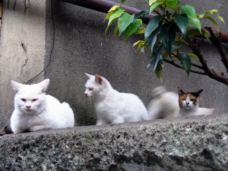 塀の上の猫一族2