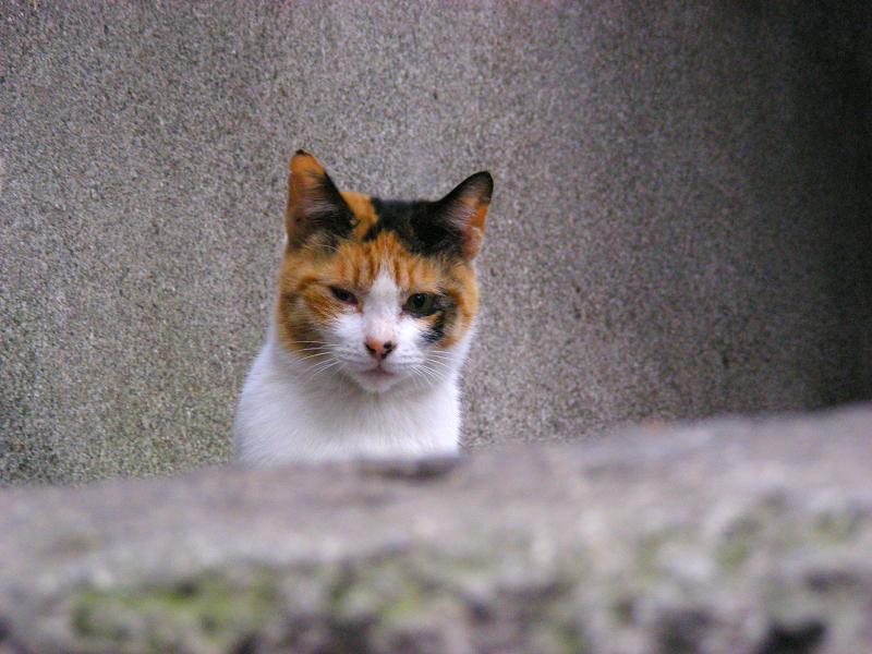 塀の上の猫一族3