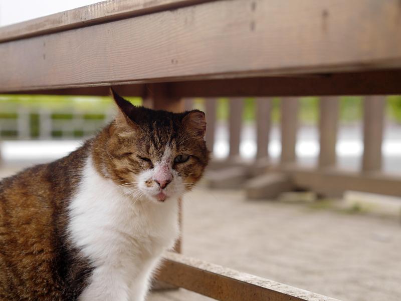 ベンチ下の仲良し猫1