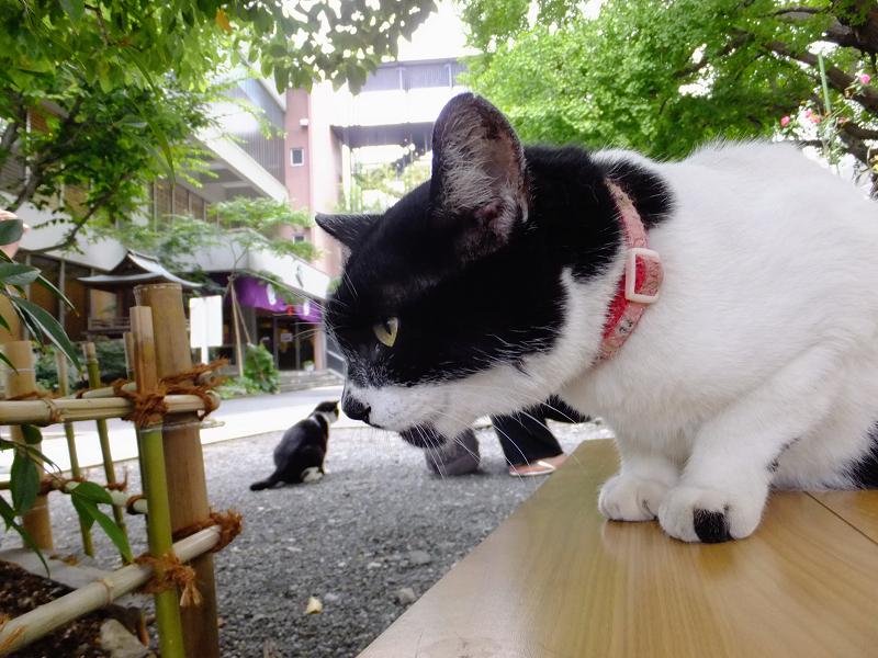 境内の白黒猫3