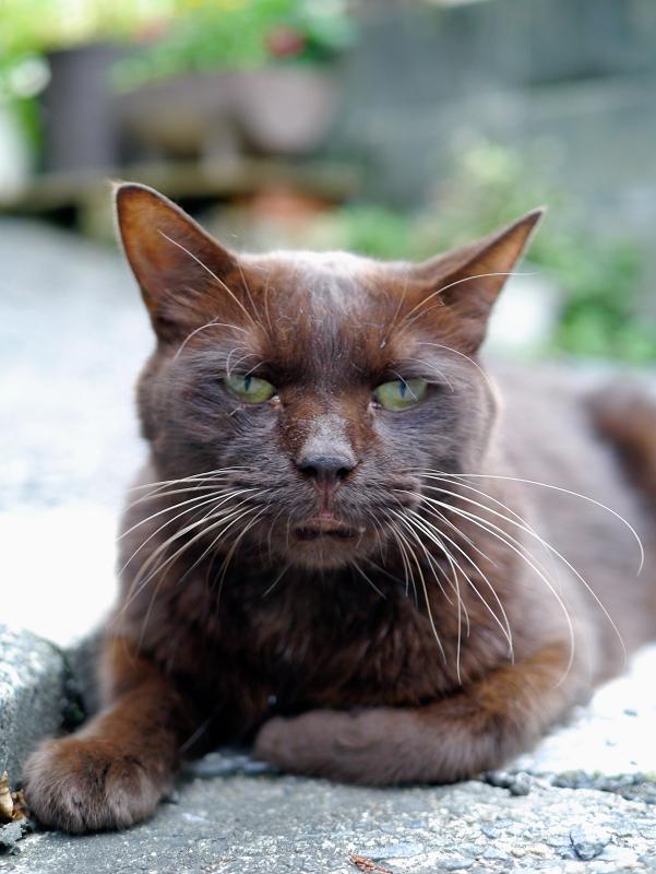 焦げ茶色猫の視線2