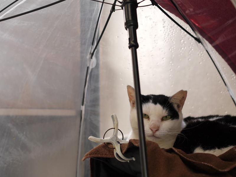 漁港で暮らしてる白黒猫