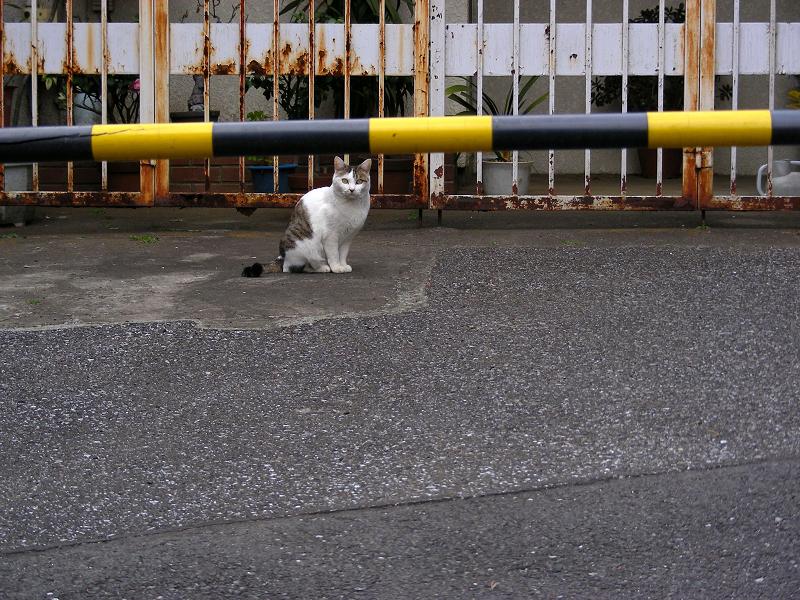 行き止まりの猫
