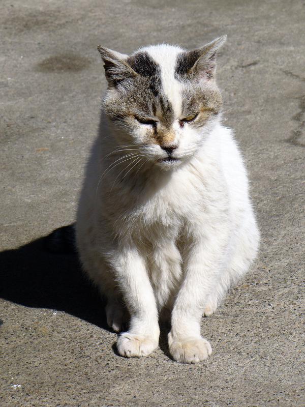 昔から知ってる猫たち1