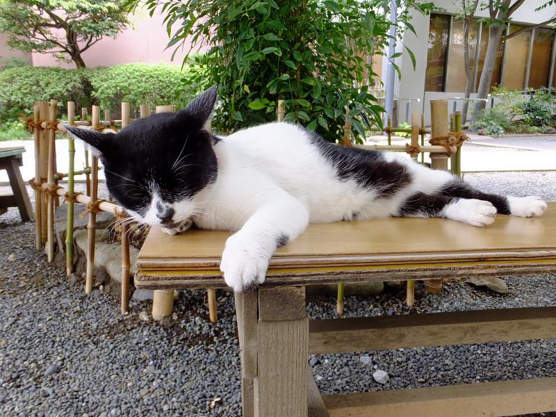 ベンチ上の白黒猫2