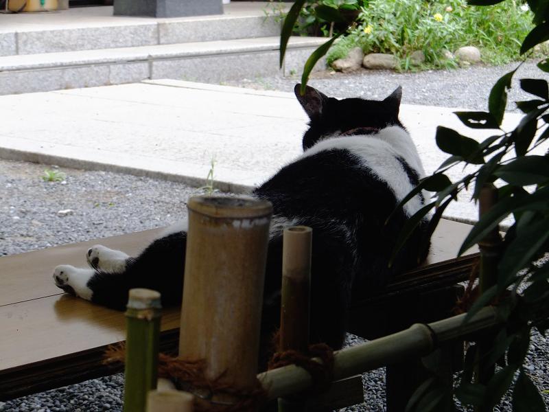 ベンチ上の白黒猫3