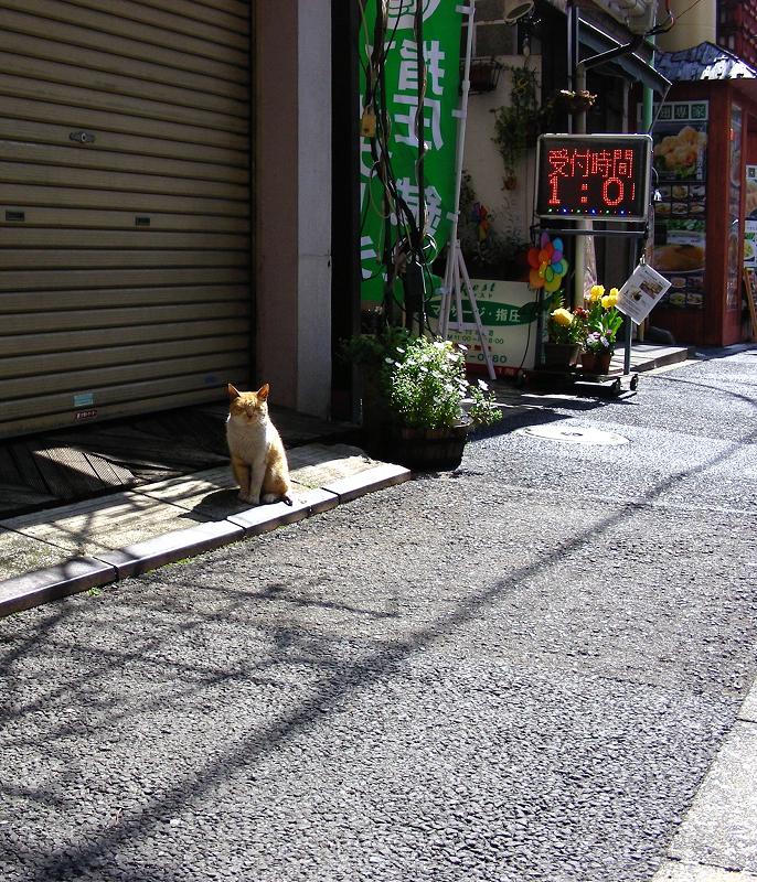 繁華街の茶トラ猫1