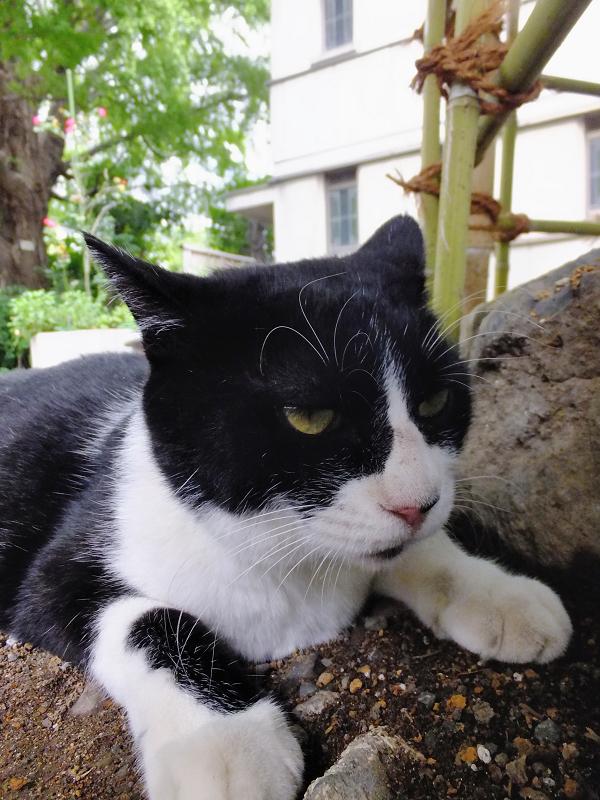 不機嫌な黒白猫3