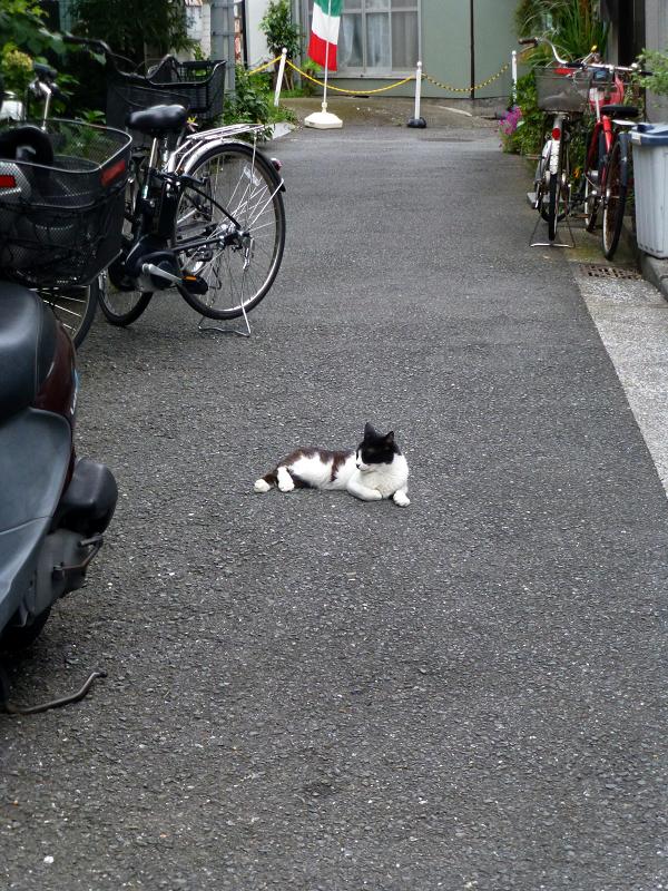裏路地の黒白猫1