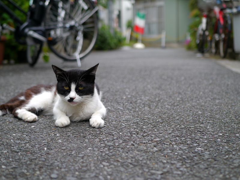 裏路地の黒白猫2