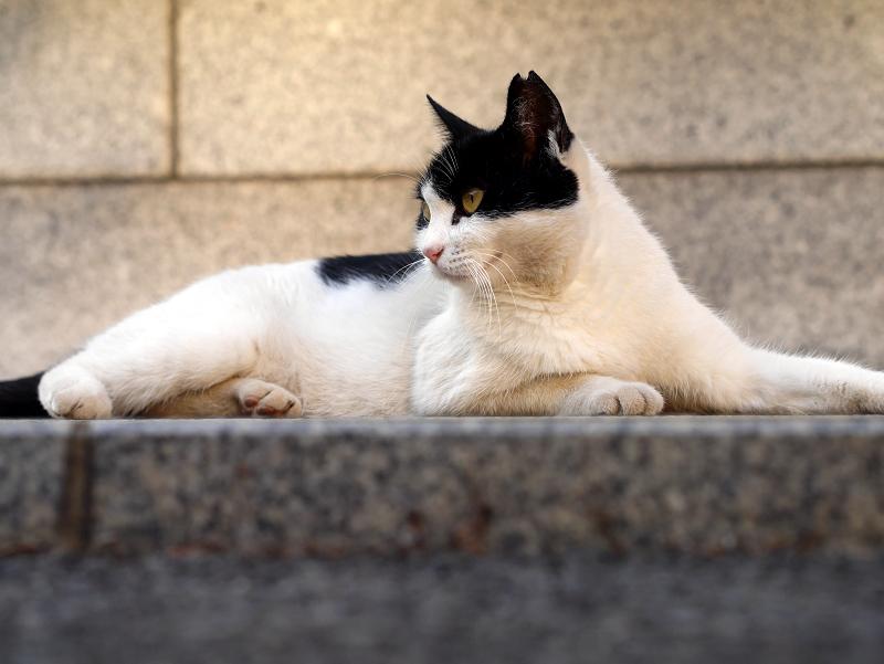 腹這う白黒猫2