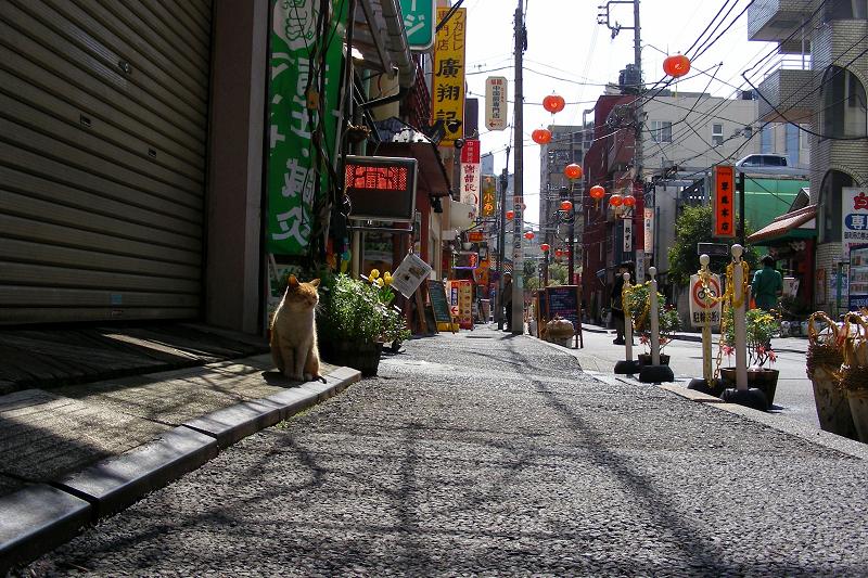 繁華街店前の茶トラ猫1