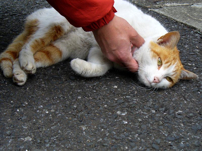 路地上で触られる茶白猫1