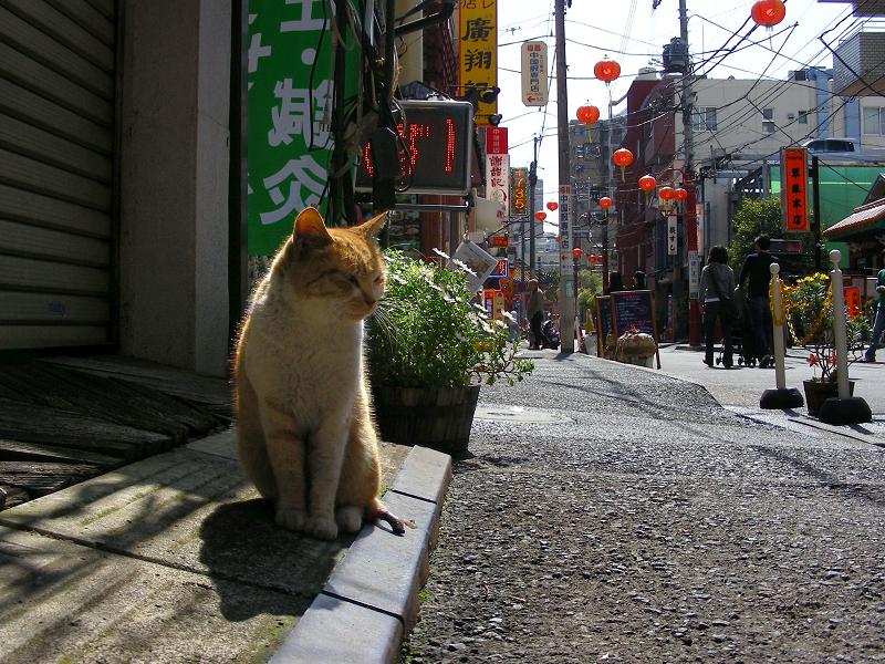 繁華街店前の茶トラ猫2