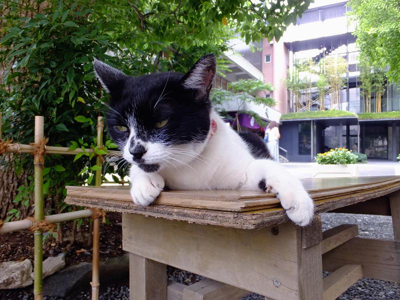 ベンチの上の白黒猫1