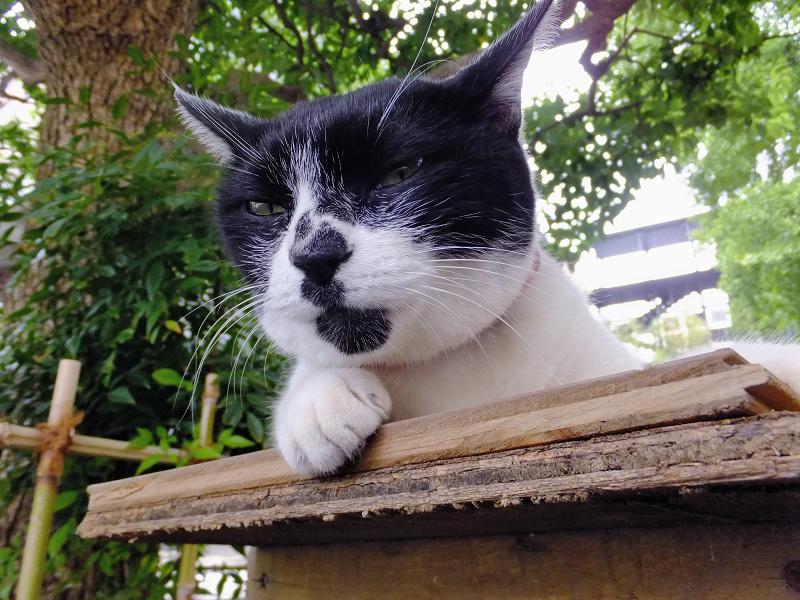 ベンチの上の白黒猫2