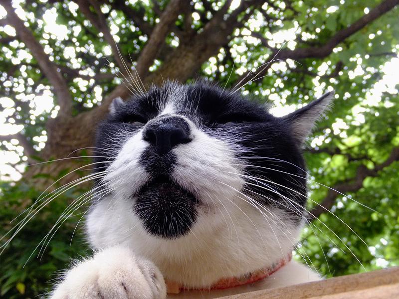 ベンチの上の白黒猫3