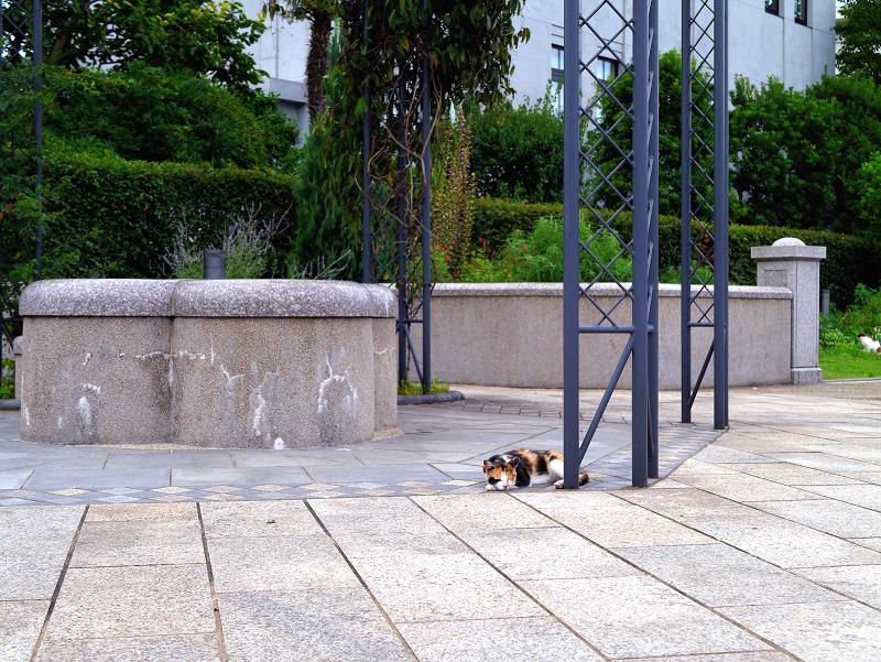 公園で寝てた三毛猫1