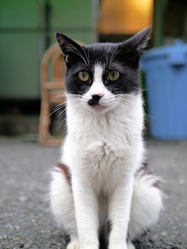 裏路地の黒白猫の立ち姿2