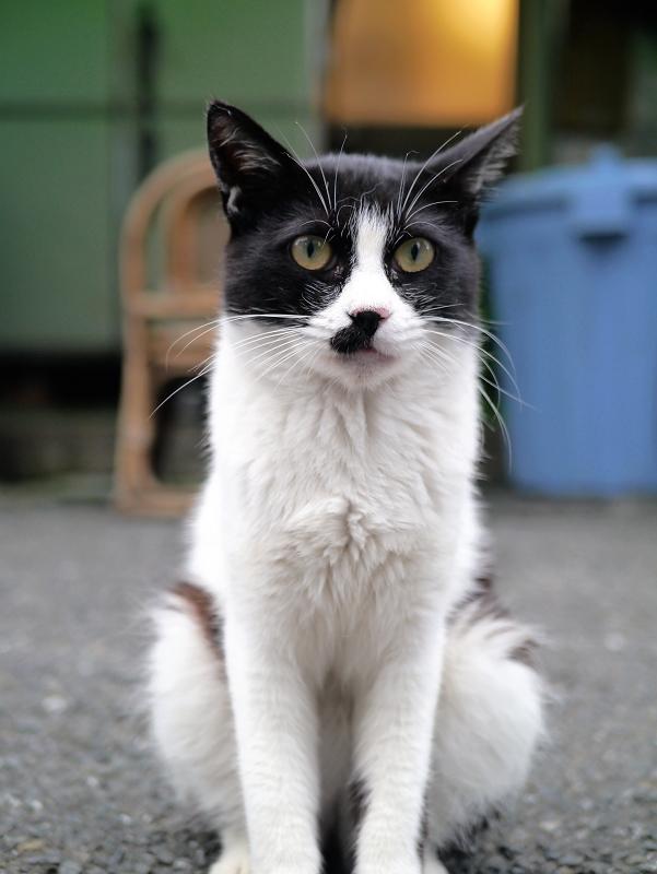 裏路地の黒白猫の立ち姿3