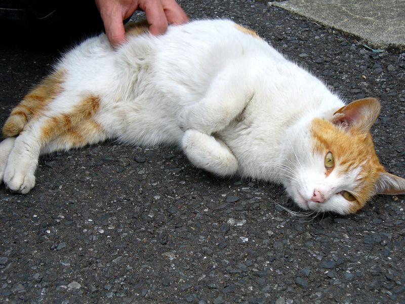 路地で腰を触られる茶白猫2
