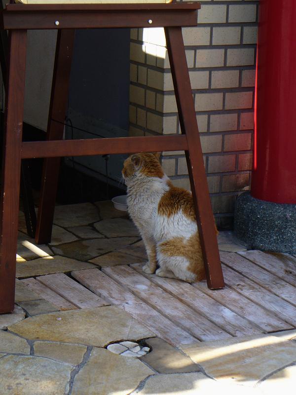 お店前の白茶猫1