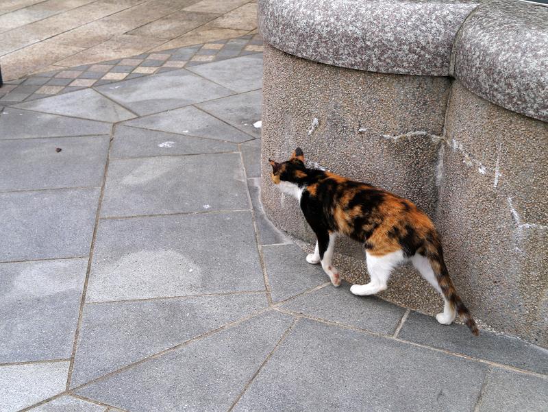 公園を歩く三毛猫1