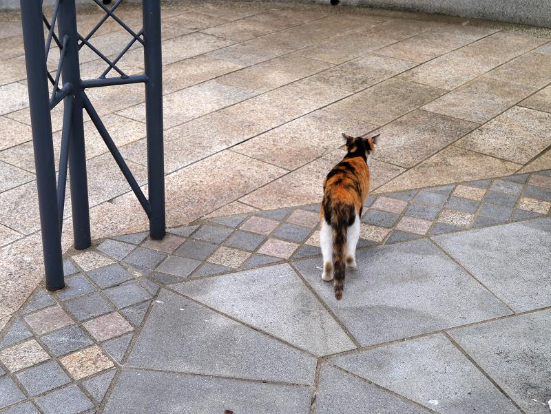 公園を歩く三毛猫2