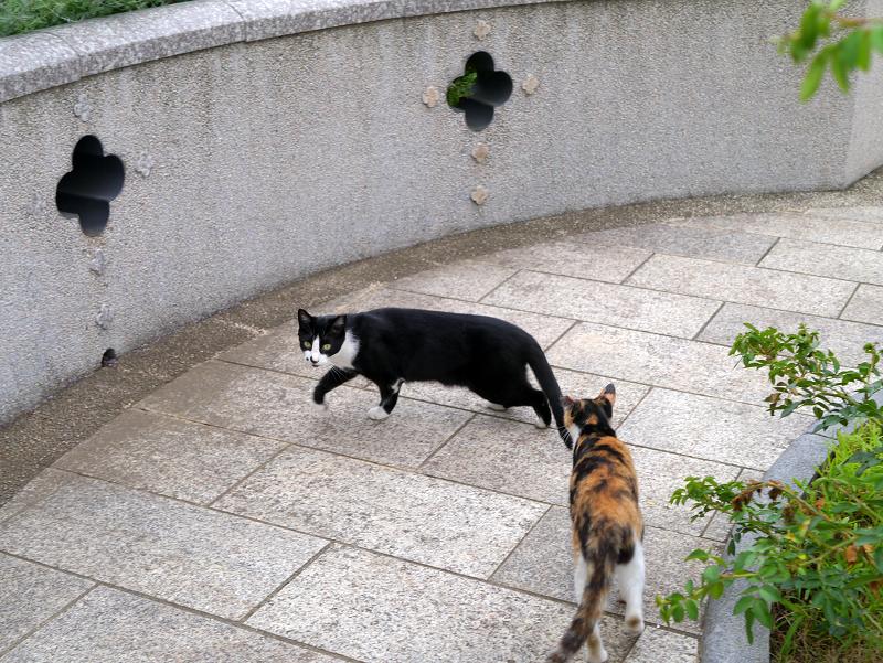 公園を歩く三毛猫3
