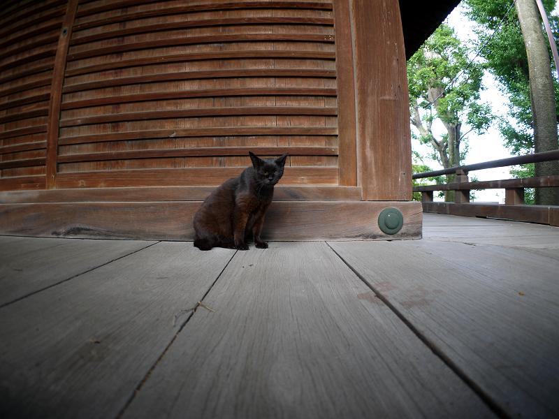 お堂濡れ縁の黒猫1