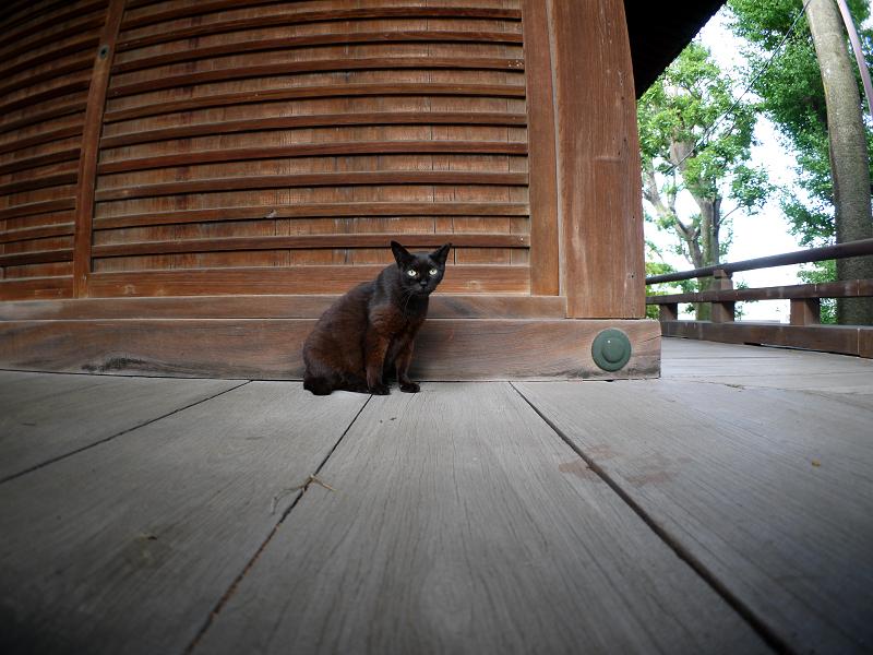 お堂濡れ縁の黒猫2