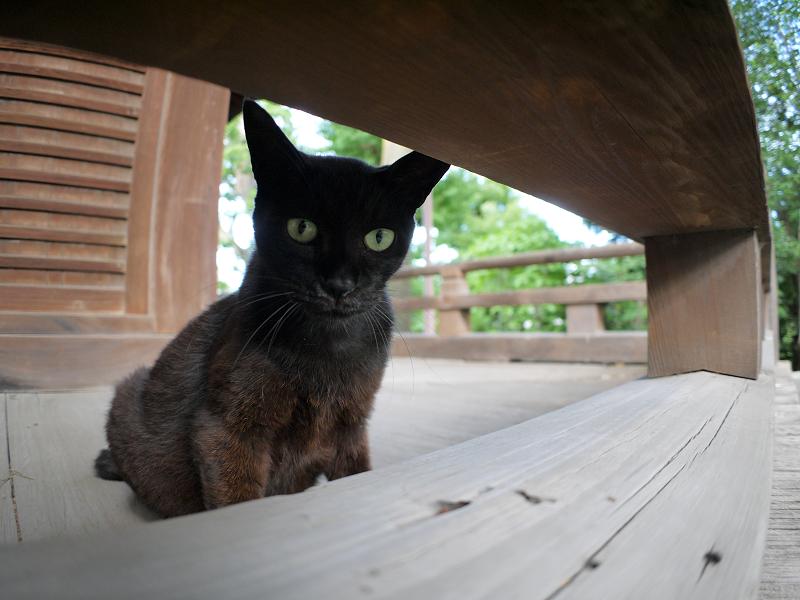 お堂濡れ縁の黒猫3