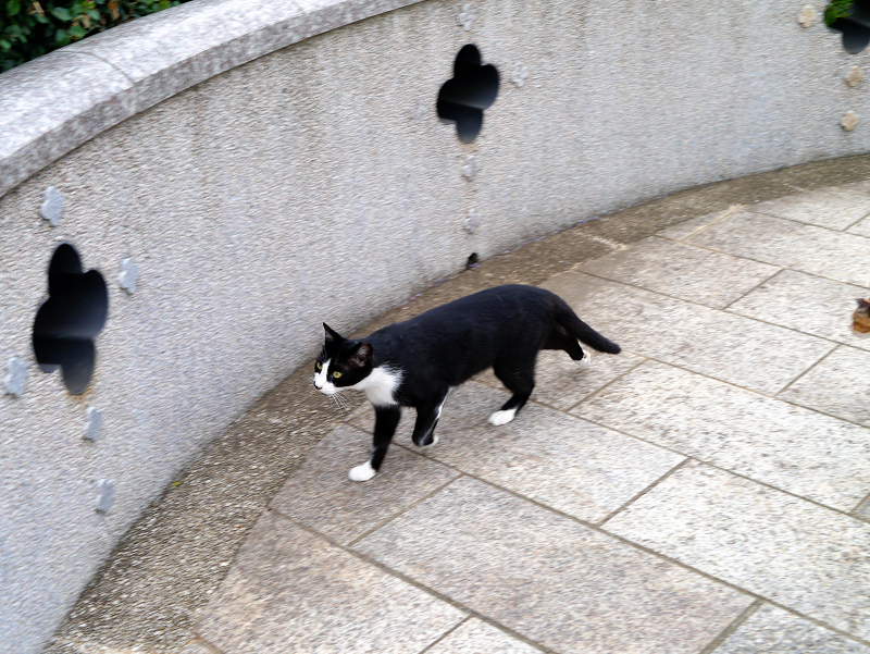 公園の黒白猫1