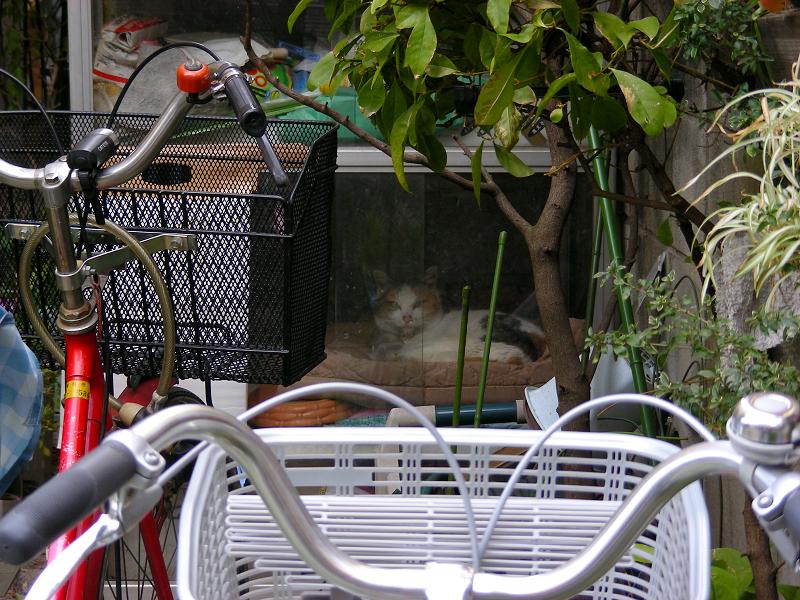 ガラスドアハウスの猫2