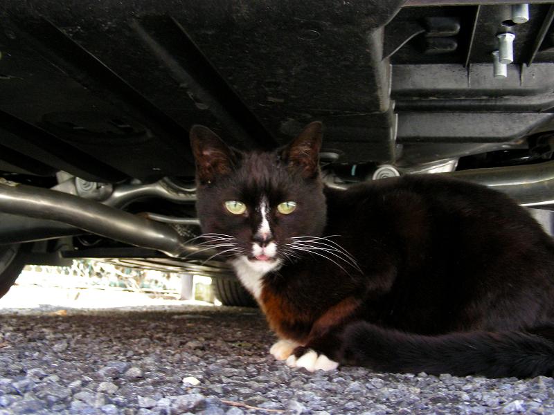 車の下の黒白猫2