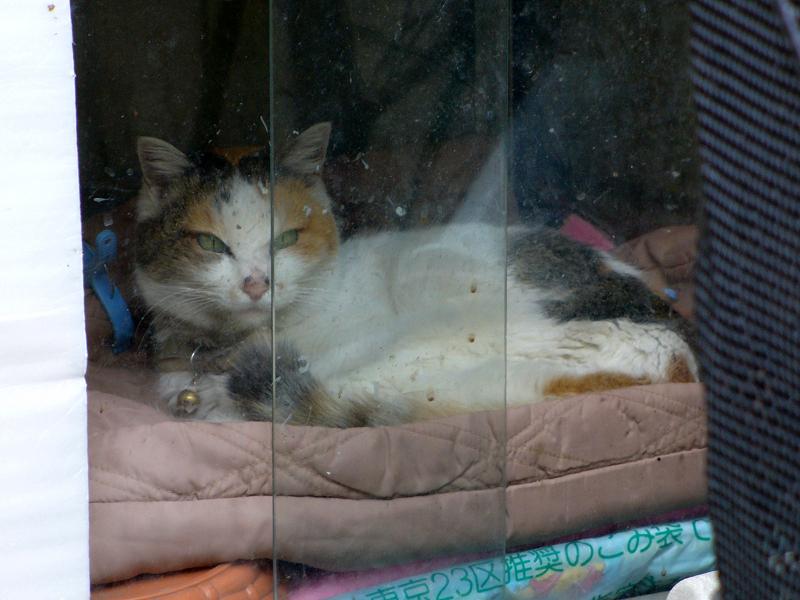 ガラスドアハウスの猫3