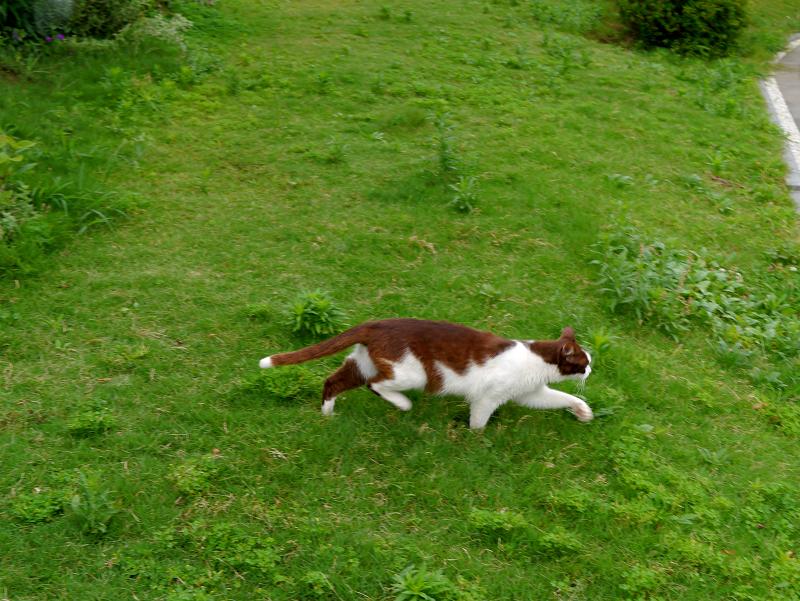 草むらを走る猫1