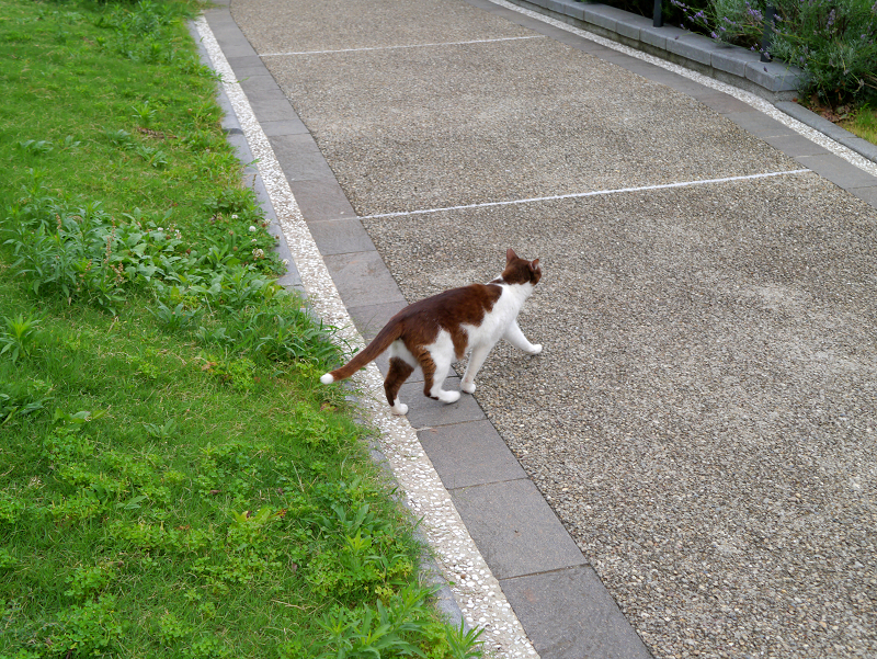 草むらを走る猫2